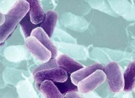 Les bactéries ne colonisent pas l'intestin avant la naissance (étude)
