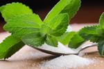 stevia-sucrant-plante