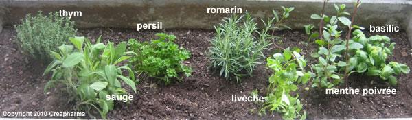 Thym - 7 plantes médicinales à planter au printemps