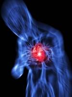 Après une crise cardiaque, des fibres pour vivre plus longtemps