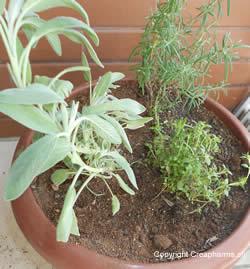 plantes-medicinales-printemps-ete