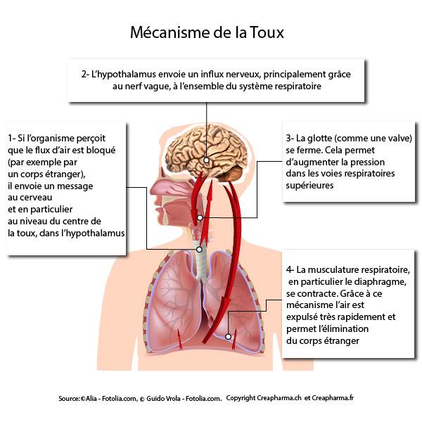 toux infographie mécanisme toux