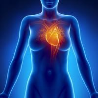 Le cœur des femmes, plus fragile que celui des hommes