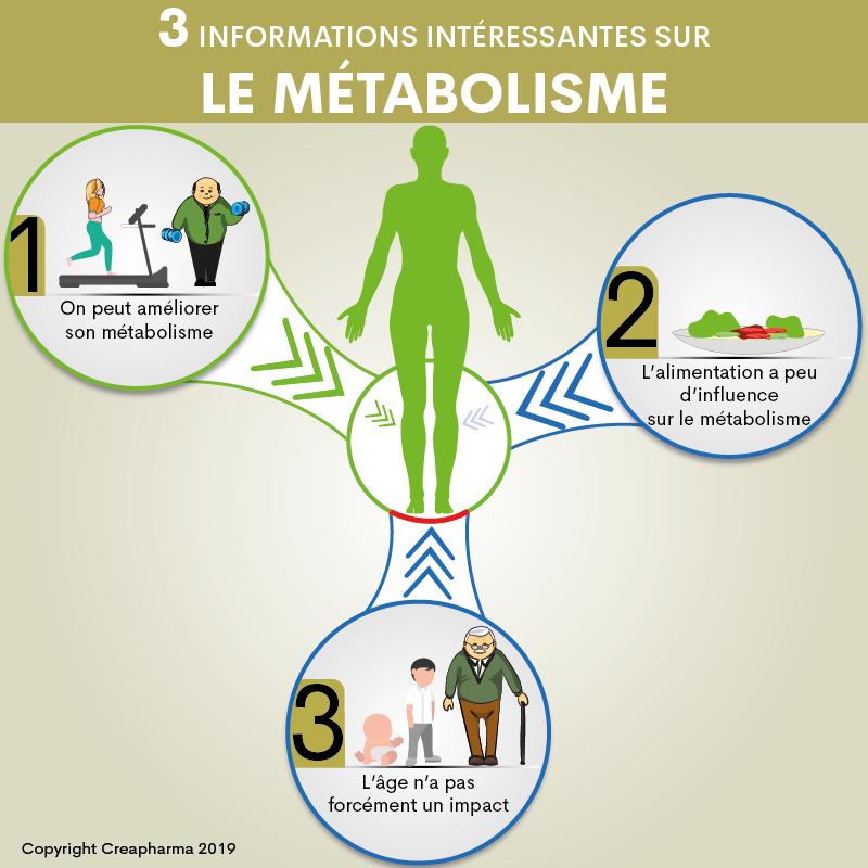 3 informations intéressantes sur le métabolisme - Creapharma