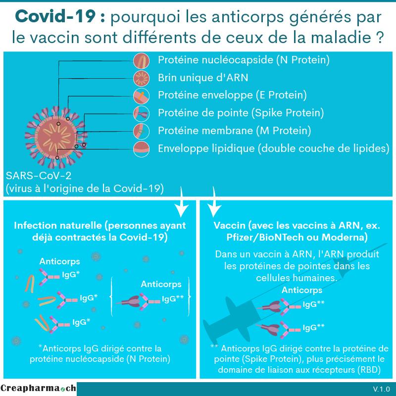 Covid-19 : pourquoi les anticorps générés par le vaccin sont différents de ceux de la maladie ?